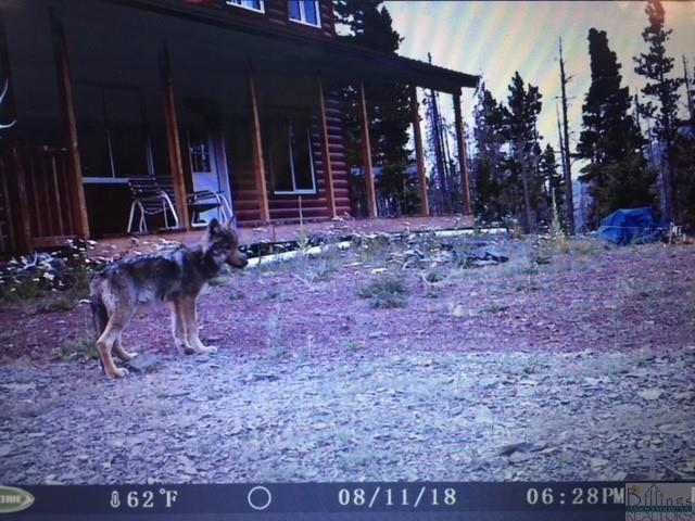 00 Wolf Creek  Lyons Creek